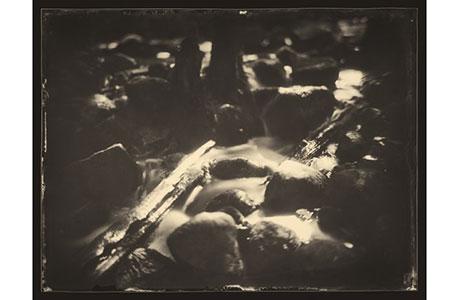 Фотаздымкі на шкле: ў Мiнску пройдзе мультымедыйная прэзентацыя фотапраекту «Сонны лес»