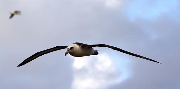 Сердце наблюдателя за птицами